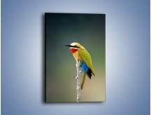 Obraz na płótnie – Kolorowy ptaszek na gałęzi – jednoczęściowy prostokątny pionowy Z293
