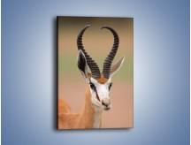 Obraz na płótnie – Pokaz pięknych rogów – jednoczęściowy prostokątny pionowy Z294