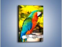 Obraz na płótnie – Tęczowe kolory na papudze – jednoczęściowy prostokątny pionowy Z312