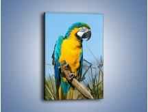 Obraz na płótnie – Zaciekawiona obserwująca papuga – jednoczęściowy prostokątny pionowy Z318