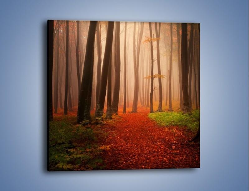 Obraz na płótnie – Las pełen tajemnic – jednoczęściowy kwadratowy KN909