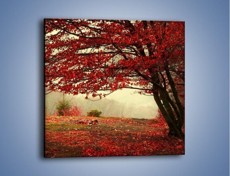Obraz na płótnie – Spadające liście z drzew – jednoczęściowy kwadratowy KN910