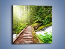 Obraz na płótnie – Bezpieczna droga przez las – jednoczęściowy kwadratowy KN922