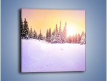 Obraz na płótnie – Choinki zatopione w śniegu – jednoczęściowy kwadratowy KN940