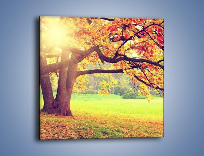 Obraz na płótnie – Jesienią w parku też jest pięknie – jednoczęściowy kwadratowy KN967