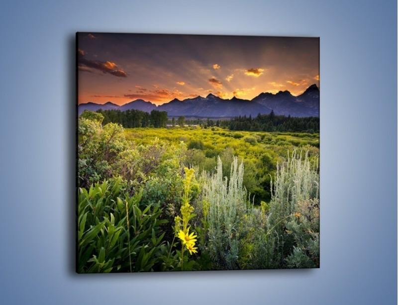 Obraz na płótnie – Wieczorny spokój na polanie – jednoczęściowy kwadratowy KN987