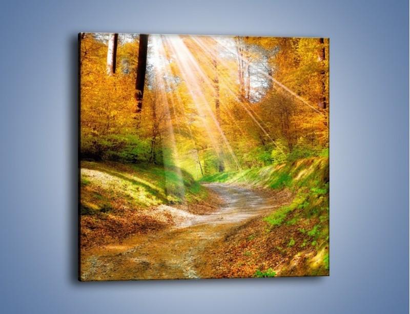 Obraz na płótnie – Promienną i słoneczną ścieżką przez las – jednoczęściowy kwadratowy KN989