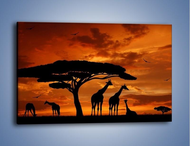 Obraz na płótnie – Żyrafy wieczorową porą – jednoczęściowy prostokątny poziomy GR266