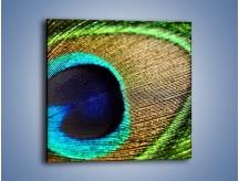 Obraz na płótnie – Cudowne pawie oko – jednoczęściowy kwadratowy O048