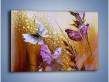 Obraz na płótnie – Delikatne małe motylki – jednoczęściowy prostokątny poziomy GR471