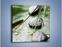 Obraz na płótnie – Krople deszczu na liściu – jednoczęściowy kwadratowy O203