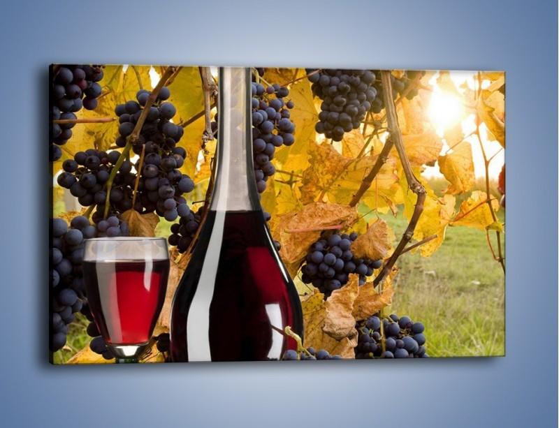 Obraz na płótnie – Wino wśród winogron – jednoczęściowy prostokątny poziomy JN007