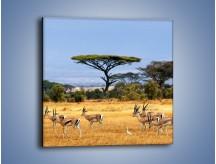 Obraz na płótnie – Antylopy w słonecznej afryce – jednoczęściowy kwadratowy Z003