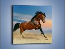 Obraz na płótnie – Brązowy koń na pustyni – jednoczęściowy kwadratowy Z011
