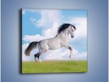 Obraz na płótnie – Białe obłoki i koń – jednoczęściowy kwadratowy Z019