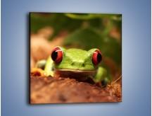 Obraz na płótnie – Bystre oczka małej żabki – jednoczęściowy kwadratowy Z023