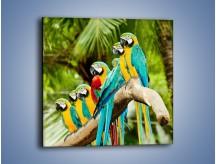 Obraz na płótnie – Kolorowe papugi w szeregu – jednoczęściowy kwadratowy Z029