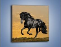 Obraz na płótnie – Bieg z koniem po polanie – jednoczęściowy kwadratowy Z057