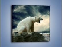 Obraz na płótnie – Donośny krzyk polarnego niedźwiedzia – jednoczęściowy kwadratowy Z114