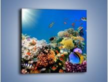 Obraz na płótnie – Fauna i kolorowi towarzysze – jednoczęściowy kwadratowy Z116