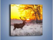 Obraz na płótnie – Jeleń o zachodzie słońca – jednoczęściowy kwadratowy Z164