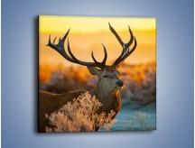 Obraz na płótnie – Ciężkie poroże jelenia – jednoczęściowy kwadratowy Z165