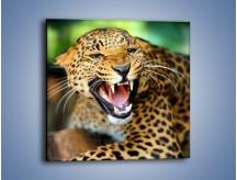 Obraz na płótnie – Jaguar z pazurem – jednoczęściowy kwadratowy Z184