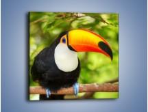 Obraz na płótnie – Kolorowy dziób tukana – jednoczęściowy kwadratowy Z195