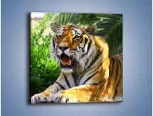 Obraz na płótnie – Cała duma tygrysa – jednoczęściowy kwadratowy Z199