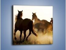 Obraz na płótnie – Cowboy wśród koni – jednoczęściowy kwadratowy Z206