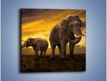 Obraz na płótnie – Ciekawość małego słonika – jednoczęściowy kwadratowy Z212