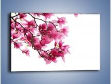 Obraz na płótnie – Kwiat wiśni na drzewie – jednoczęściowy prostokątny poziomy K003