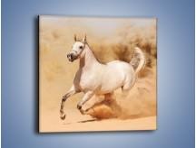 Obraz na płótnie – Klacz w tumanach piasku – jednoczęściowy kwadratowy Z233