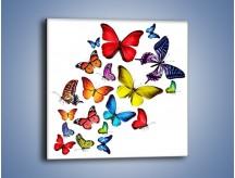 Obraz na płótnie – Kolorowo wśród motyli – jednoczęściowy kwadratowy Z236