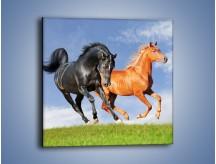 Obraz na płótnie – Czarny rudy i koń – jednoczęściowy kwadratowy Z241