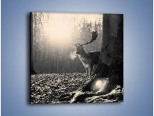 Obraz na płótnie – Jeleń w sepii – jednoczęściowy kwadratowy Z250