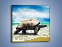 Obraz na płótnie – Jak tu nie kochać żółwi – jednoczęściowy kwadratowy Z251