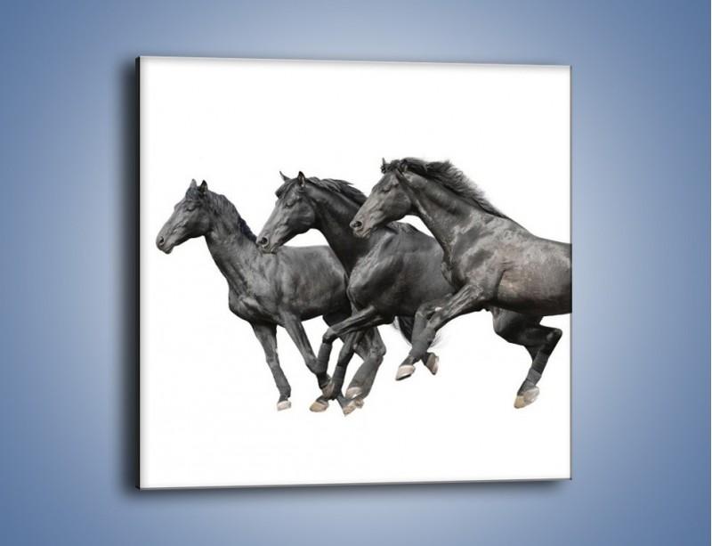 Obraz na płótnie – Kadrowe ujęcie mustanga – jednoczęściowy kwadratowy Z253
