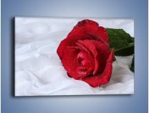 Obraz na płótnie – Bordowa róża na białej pościeli – jednoczęściowy prostokątny poziomy K1023