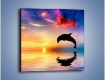 Obraz na płótnie – Delfin i jego odbicie – jednoczęściowy kwadratowy Z268
