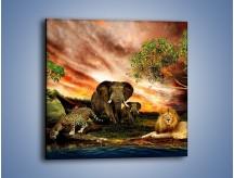 Obraz na płótnie – Afrykańscy przyjaciele przy wodopoju – jednoczęściowy kwadratowy Z271