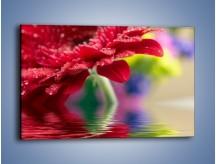 Obraz na płótnie – Bordowy kwiat odbity w wodzie – jednoczęściowy prostokątny poziomy K138