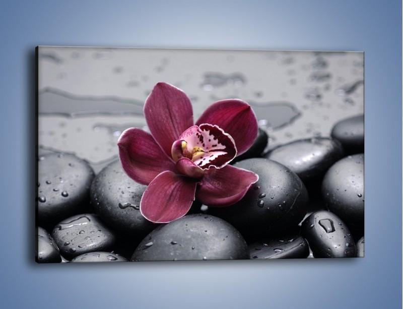 Obraz na płótnie – Bordowy storczyk i ciemne towarzystwo – jednoczęściowy prostokątny poziomy K156