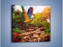 Obraz na płótnie – Kolorowa papuga w locie – jednoczęściowy kwadratowy Z280