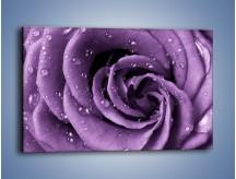 Obraz na płótnie – Głęboki fiolet zachowany w róży – jednoczęściowy prostokątny poziomy K177