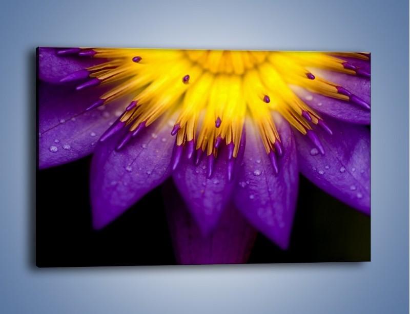 Obraz na płótnie – Baśniowy kwiat z tajemnicą – jednoczęściowy prostokątny poziomy K189