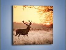 Obraz na płótnie – Jeleń szukający sarny – jednoczęściowy kwadratowy Z306
