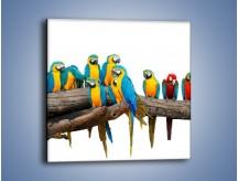 Obraz na płótnie – Kolorowe stado papug – jednoczęściowy kwadratowy Z326