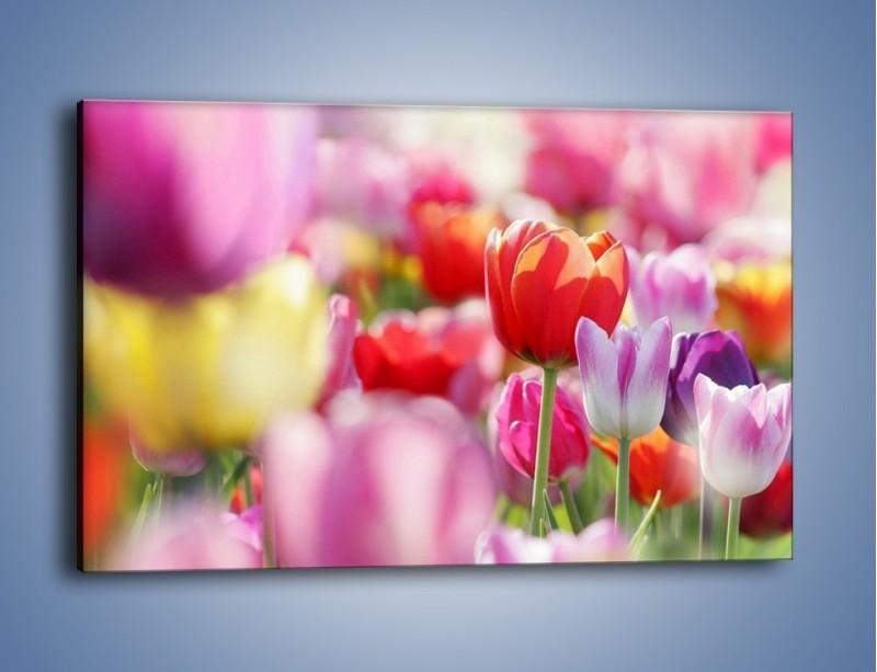 Obraz na płótnie – Boso przez tulipany – jednoczęściowy prostokątny poziomy K344