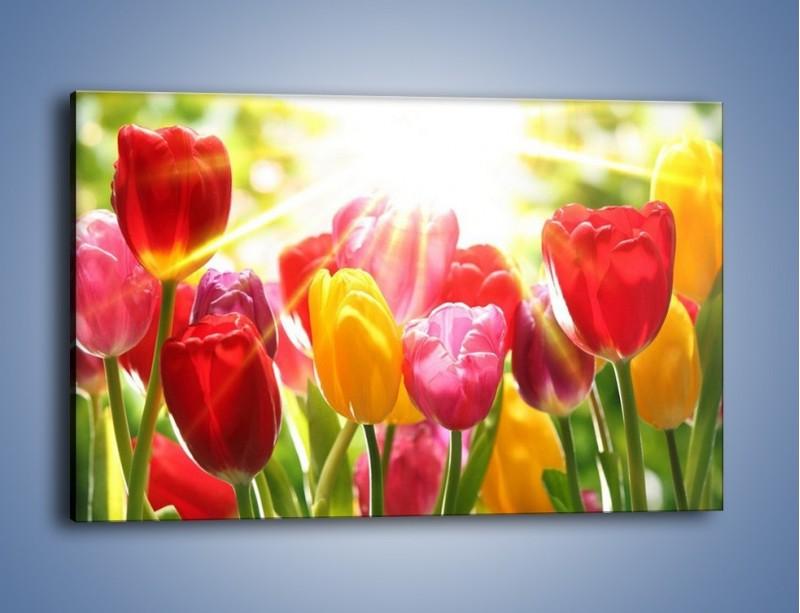 Obraz na płótnie – Bajecznie słoneczne tulipany – jednoczęściowy prostokątny poziomy K428